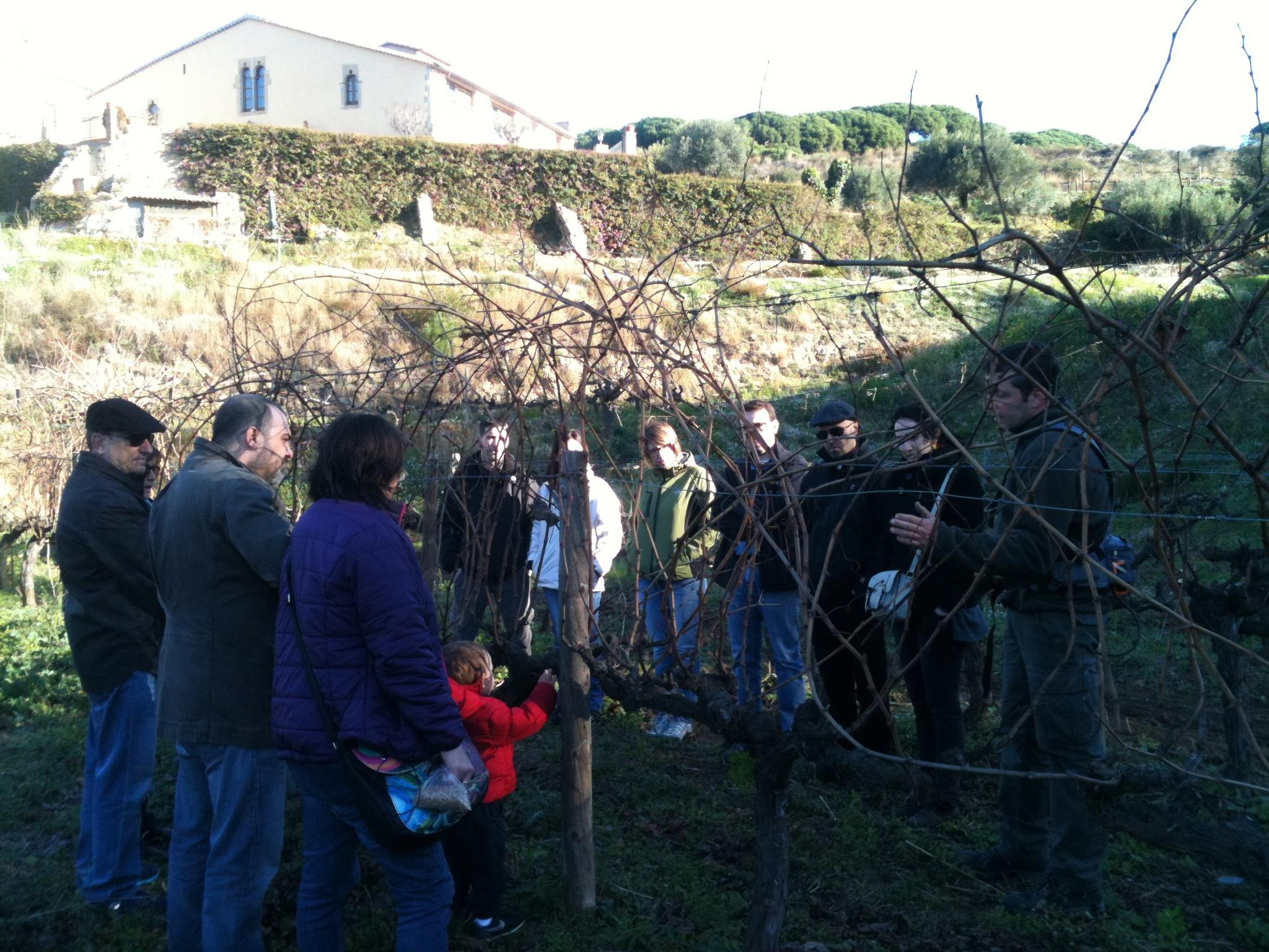 Ruta del vino DO Alella con este planing