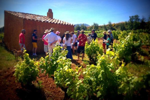 Carlania Celler «Trepateja» entre vinyes