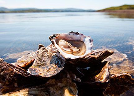 Degusta y visita criaderos de ostras en Irlanda