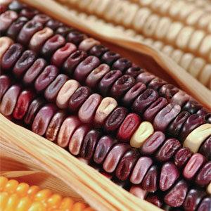 El maíz sagrado de México