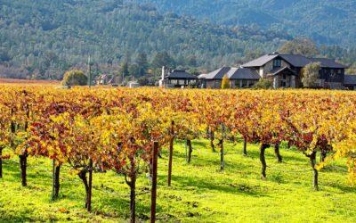 Enoturismo en California: Napa y Sonoma
