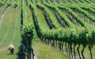 Nueva Zelanda, agrícola por naturaleza