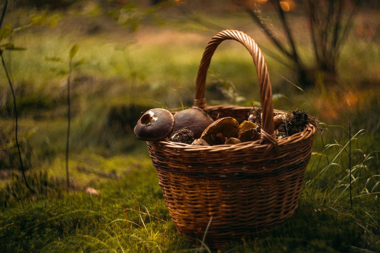 cesta con setas
