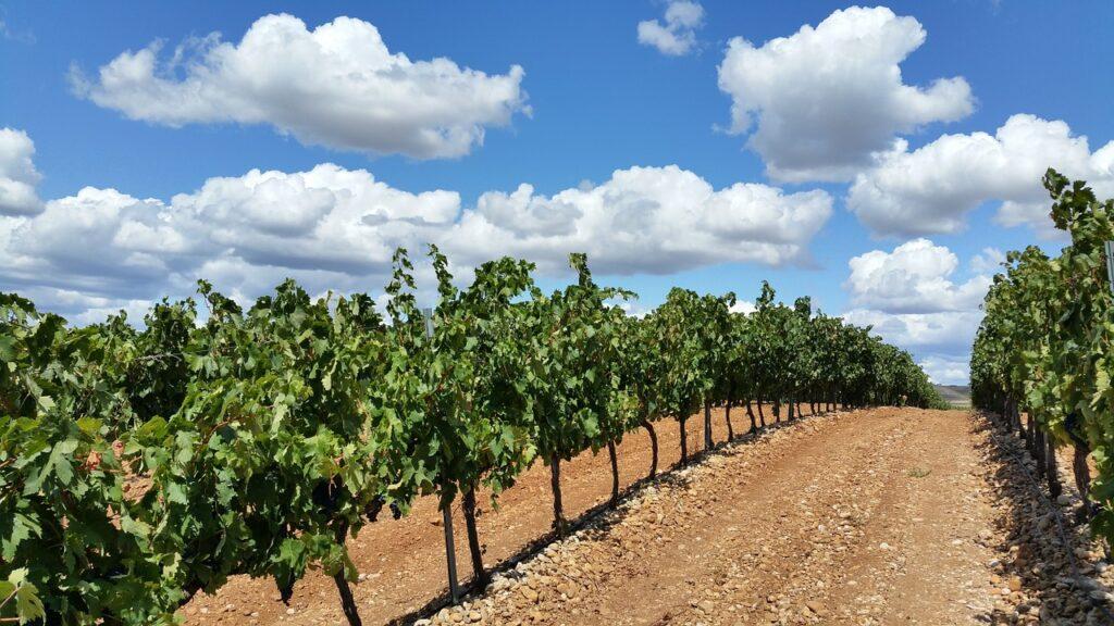 la rioja viñedos