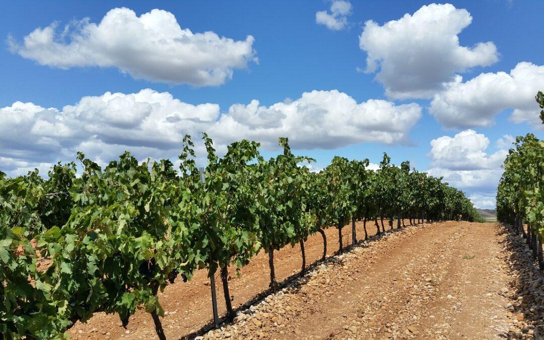 La Rioja: más allá de la cultura vinícola