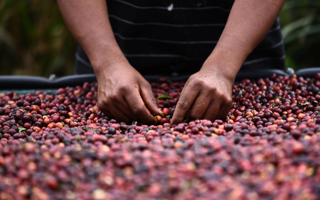 Experiencias cafeteras en Centroamérica