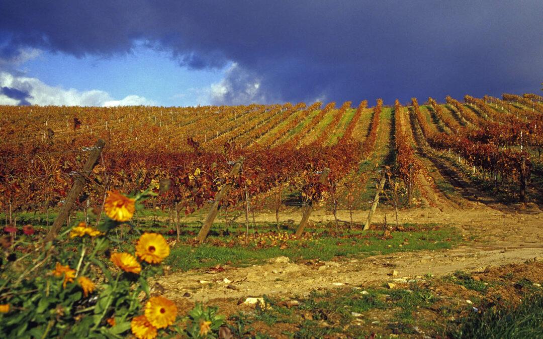 Enoturismo en León: viaje entre viñedos